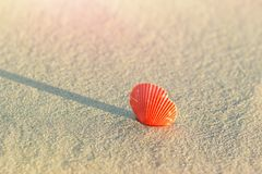 在海滩沙子的美丽的圆的平的红色贝壳在海滨 与桃红色火光的金黄阳光 暑假旅行放松 免版税库存图片
