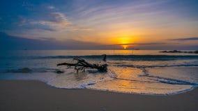 在海滩照片的自然日志树 库存照片