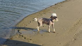 在海滩的一条狗 免版税库存照片