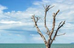 在海滩的一棵秃头树与蓝天 免版税库存图片