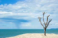 在海滩的一棵秃头树与蓝天 免版税库存照片