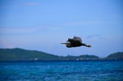 在海滩的一次brid飞行 免版税库存图片