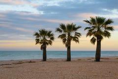 在海滩的三棵棕榈 免版税库存图片