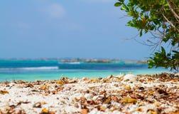 在海滩的下落的叶子 免版税库存图片