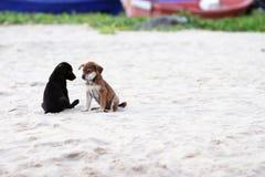 在海滩的两条狗 免版税图库摄影