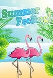 在海滩的两群桃红色火鸟 免版税库存图片