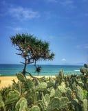 在海滩的仙人掌 免版税图库摄影