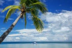 在海滩的倾斜的棕榈树, Nananu我镭海岛,斐济 库存照片