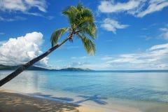 在海滩的倾斜的棕榈树, Nananu我镭海岛,斐济 库存图片