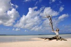 在海滩的偏僻的结构树由海运 免版税库存图片