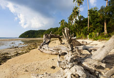 在海滩的停止的结构树 图库摄影