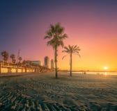 在海滩的剧烈的sunrset有棕榈的巴塞罗那 免版税库存照片