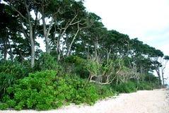 在海滩的叶子 免版税库存照片