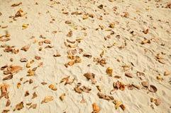 在海滩的叶子 免版税库存图片