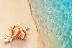 在海滩的唯一壳,在沙子的贝壳 免版税库存图片
