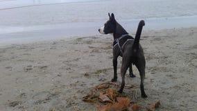 在海滩的宙斯 免版税库存图片