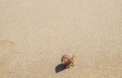 在海滩的小的螃蟹 图库摄影