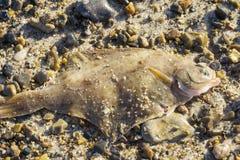 在海滩的异体类 免版税库存照片
