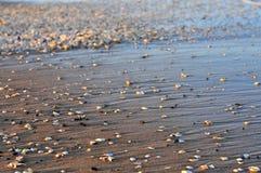 在海滩的很多壳与波浪 免版税库存照片