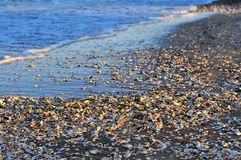 在海滩的很多壳与波浪 免版税图库摄影