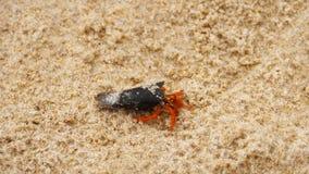在海滩的微小的寄居蟹 股票视频
