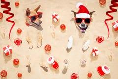 在海滩的快活的chtristmas狗 免版税库存图片