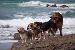 在海滩的惊人的狗 库存照片