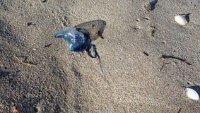 在海滩的意志薄弱的人 免版税库存照片