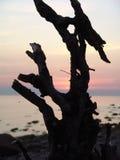 在海滩的断枝 库存图片