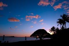 在海滩的日落与棕榈和海洋哈密尔顿岛,大堡礁,澳大利亚 免版税库存照片