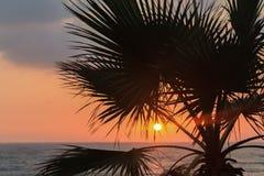 在海滩的日落与棕榈树 免版税库存照片