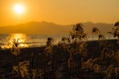在海滩的日落 美好的金黄小时 免版税库存图片