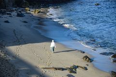 在海滩的早晨漫步 库存图片