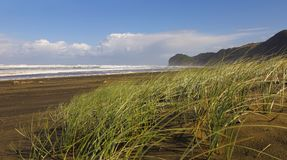 在海滩的有风晴天与布朗沙子 树木丛生的山在背景中 在风移动的沙丘的绿草 免版税库存照片