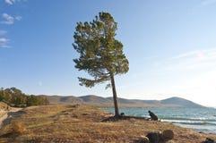 在海滩的杉木结构树 免版税库存图片