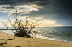在海滩的树根 免版税库存照片