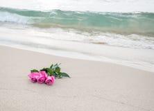 在海滩的桃红色玫瑰 免版税图库摄影