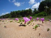 在海滩的桃红色花 库存照片
