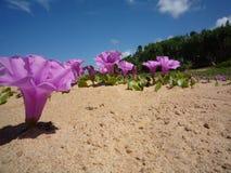 在海滩的桃红色花 库存图片