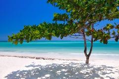 在海滩的桑给巴尔热带结构树 图库摄影