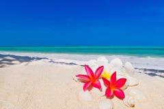在海滩的桑给巴尔热带结构树 免版税库存照片