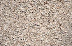 在海滩的桑迪贝壳 库存照片