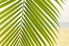 在海滩的棕榈叶 库存照片