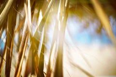 在海滩的棕榈在夏天 库存照片
