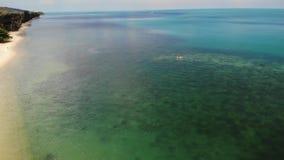 在海滩的棕榈在蓝色海附近 生长在干净的蓝色海含沙岸的热带可可椰子寄生虫视图手段的 股票视频