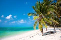 在海滩的棕榈树用绿松石水 免版税库存图片