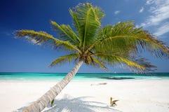 在海滩的棕榈树 免版税图库摄影