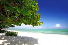 在海滩的棕榈树 库存图片
