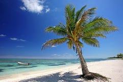 在海滩的棕榈树 免版税库存图片
