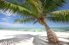 在海滩的棕榈树 库存照片
